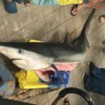 Экстремальная рыбалка у берегов Франции