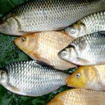 {:ru}Основы рыбной ловли{:}{:ua}Основи рибної ловлі{:}